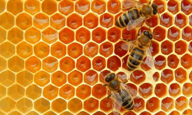 Be like the bee and produce honey